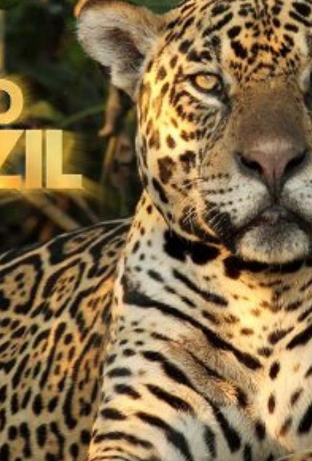 Дикая Бразилия / Wild Brazil (2014)