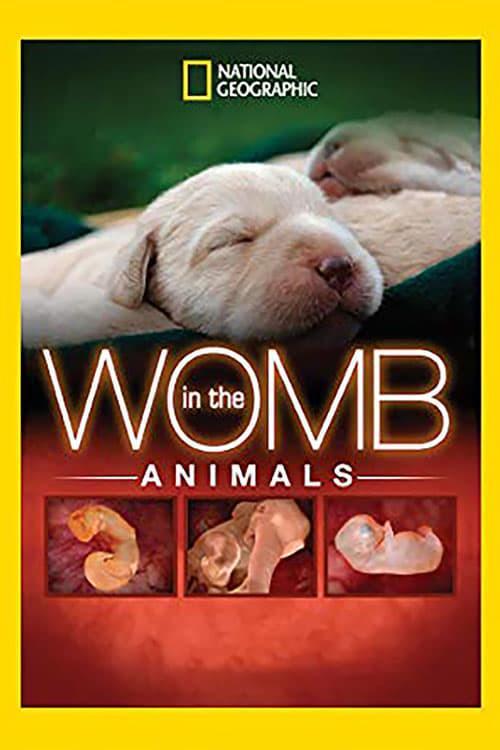 National Geographic. Жизнь до рождения: Собаки