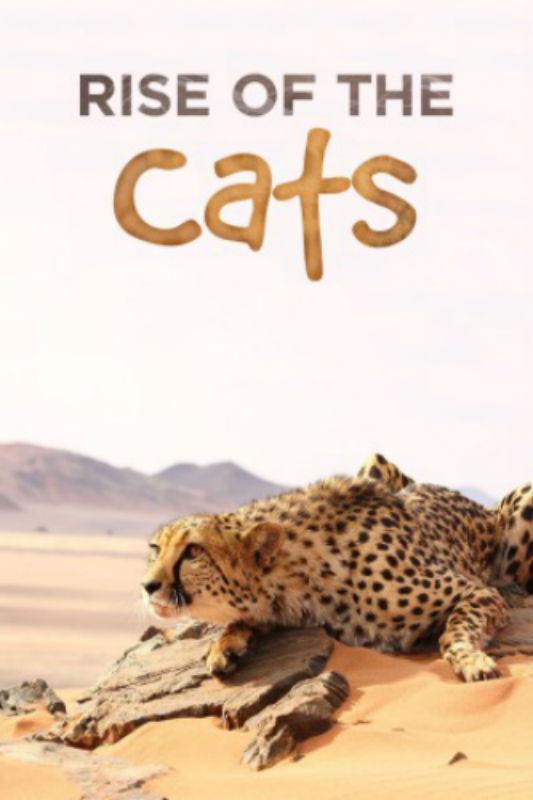 Большие кошки: Удивительная семья