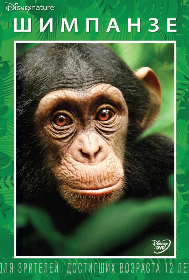 Шимпанзе / Chimpanzee (2012)