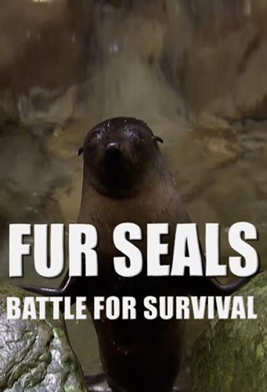Морские котики: битва за выживание