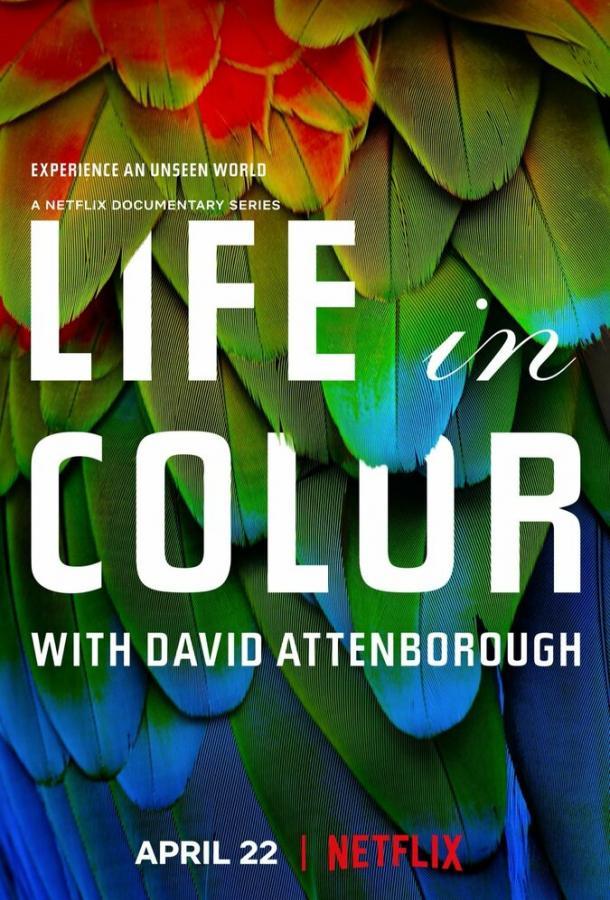 Жизнь в цвете с Дэвидом Аттенборо (2021) смотреть онлайн 1 сезон все серии подряд в хорошем качестве