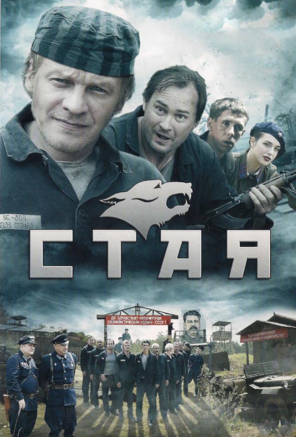 Стая (2009) смотреть онлайн 1 сезон все серии подряд в хорошем качестве