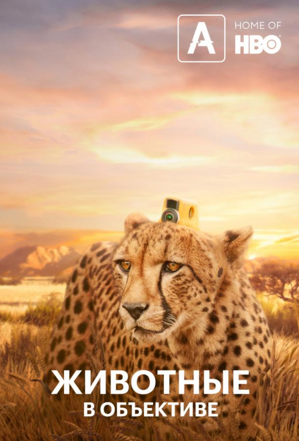 Животные в объективе / Animals With Cameras (2018)